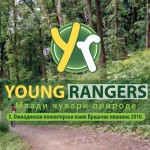 young-rangers