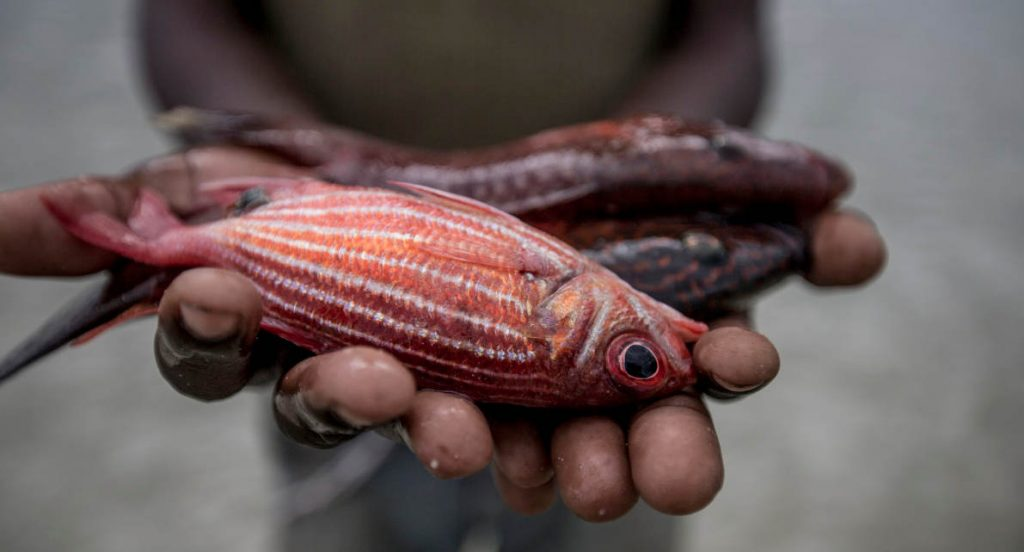 Fisherman holding fish in his hands, Mafamede, Mozambique. Mafamede is part of the protect area of Primeiras e Segundas.